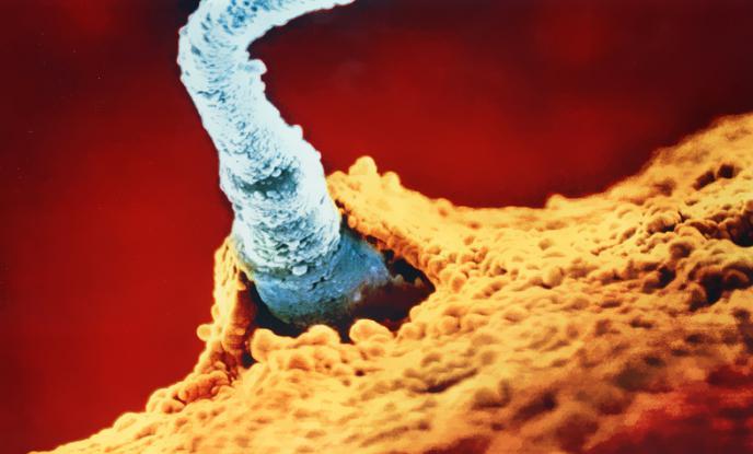 skolko-vremeni-zhivet-spermatozoid