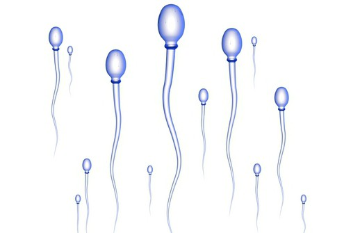 ot-chego-patologiya-golovki-spermatozoida