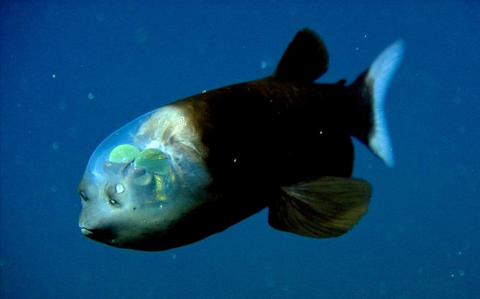 fish living at the bottom of the ocean
