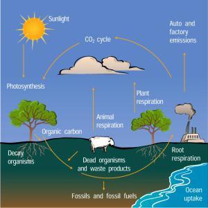 Схема углерод в природе 128