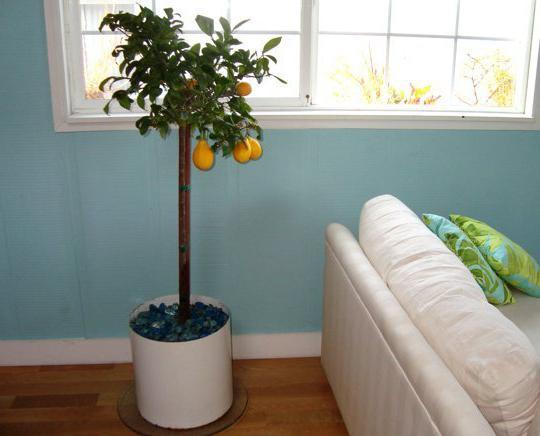 Какие растения вырастить в домашних условиях 207