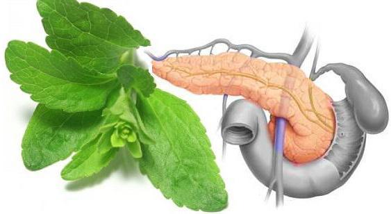 голод снижает холестерин