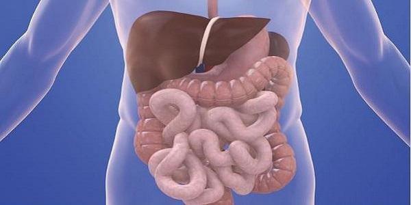 Как очистить кишечник и желудок в домашних условиях