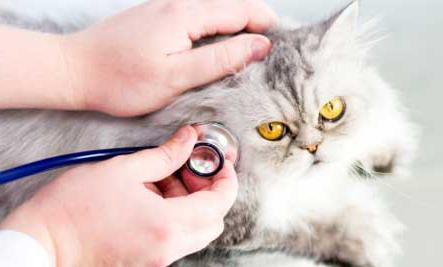 Calcivirosis in cats treated