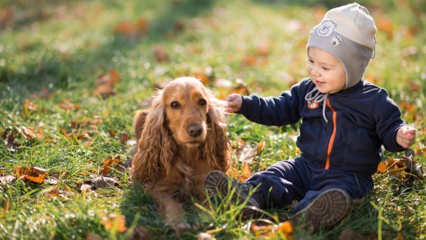 таблетки от глистов для собак отзывы