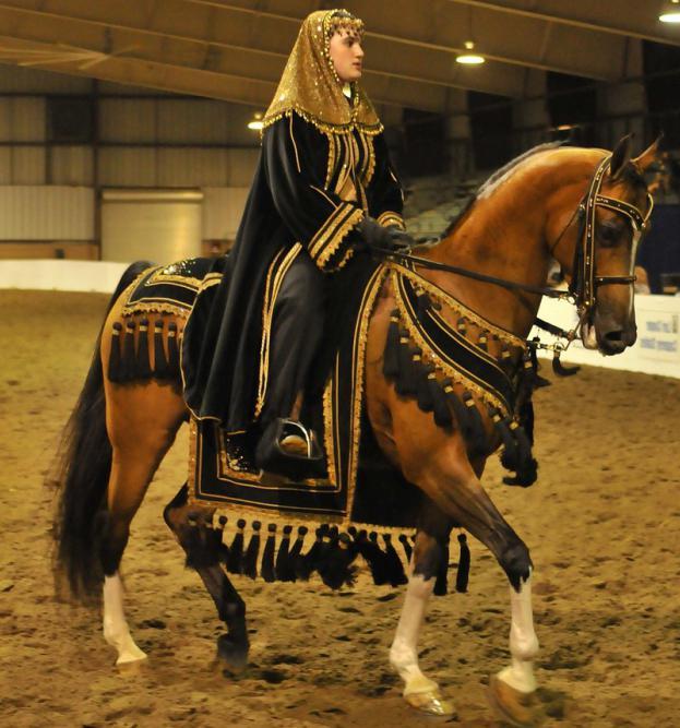 Секс с конем в арабских странах