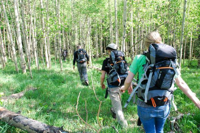 способы выживания в лесу