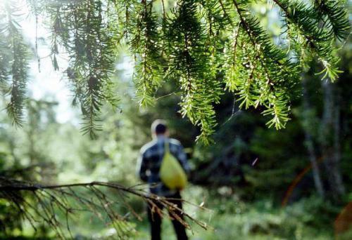 курс выживания в лесу