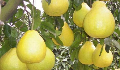 how to eat pomelo