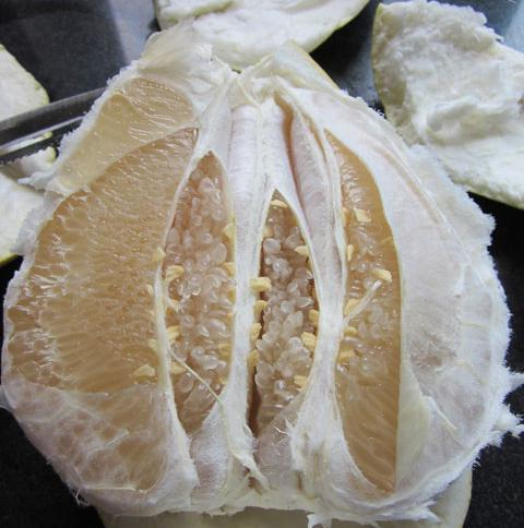 pomelo is a hybrid of what