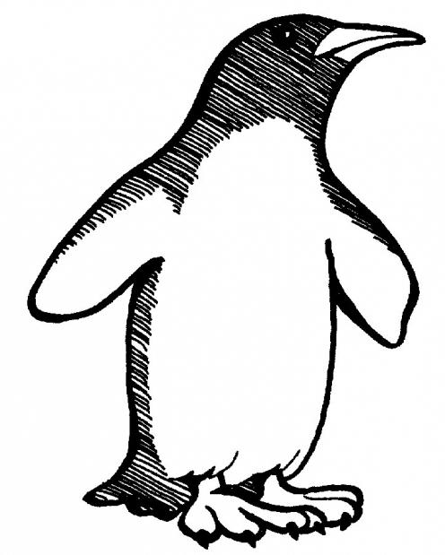 master class how to draw a penguin