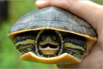 к чему сниться черепаха живая