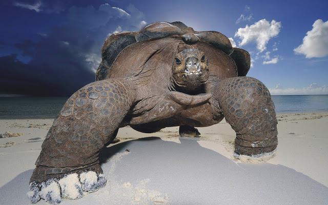 к чему снится черепаха большая