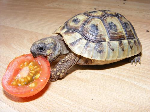 сонник к чему снится черепаха