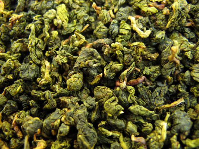 milk oolong benefit and harm