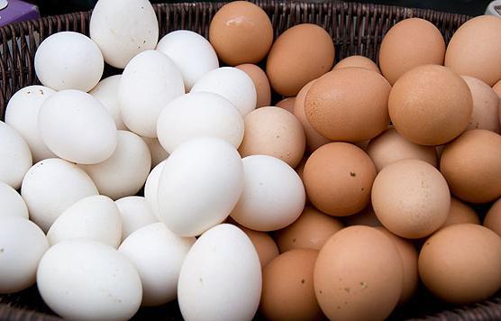 курицы несушки породы