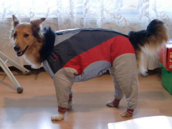 Как шить вещи для собак своими руками