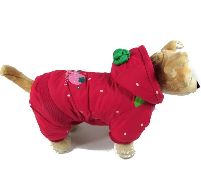 <b>Одежда для собак</b> своими руками. Аксессуары <b>для</b> <b>собак</b> :: SYL.ru