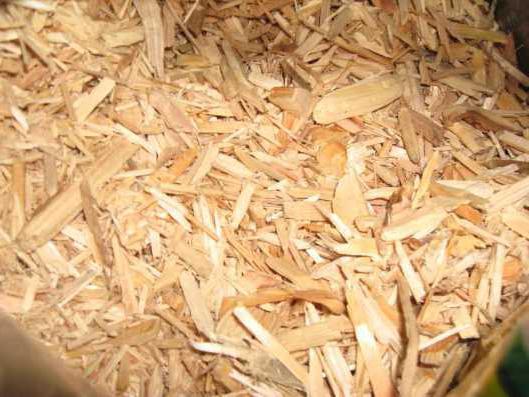 Лечебные свойства коры осины, противопоказания и отзывы