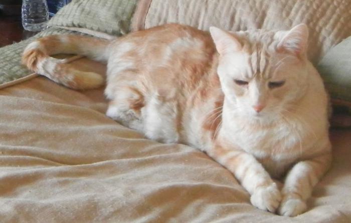 зачем коты топчут одеяло