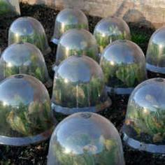 greenhouses do it yourself seedlings