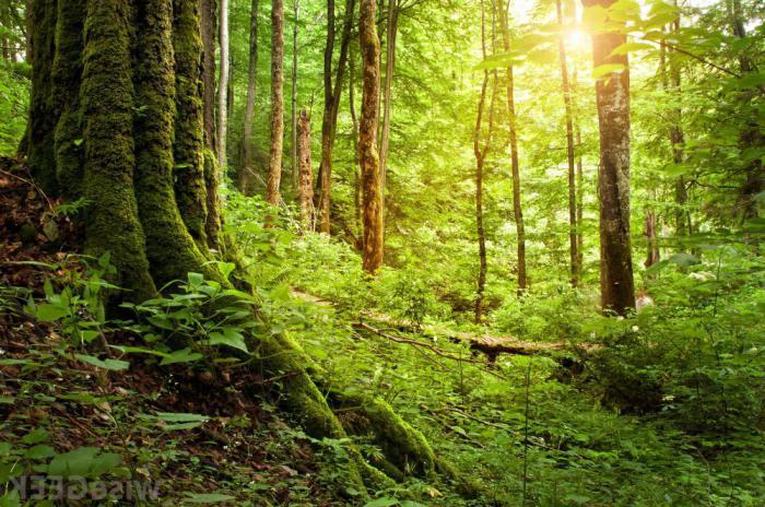 сон зимний лес