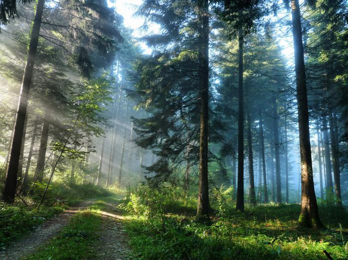 Почему приснился лес подробное толкования по сонникам