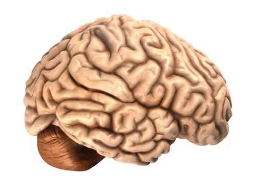 vitamins for memory and brain function for adults