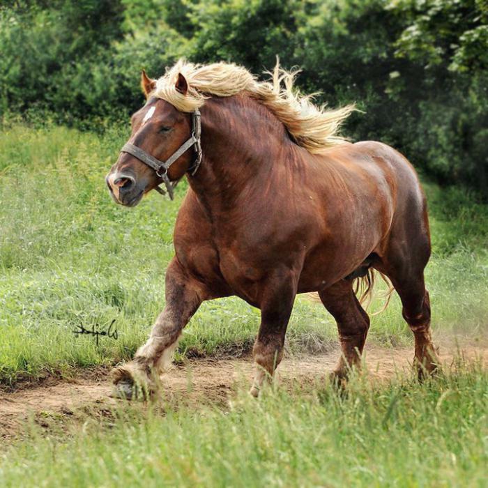 Фото конь красивый