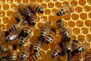 к чему снится есть мед во сне