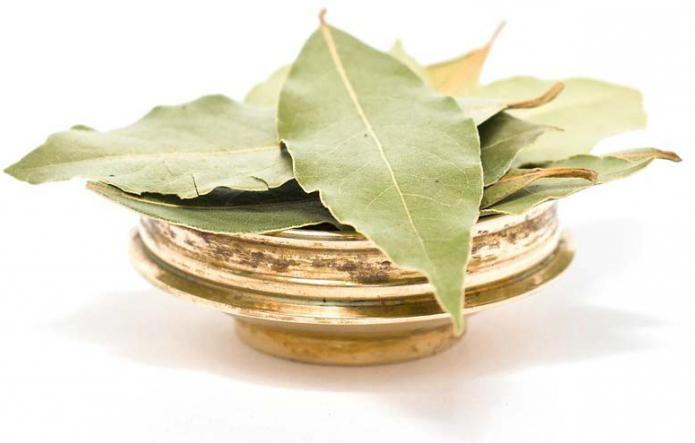 Лечение лавровым листом вред