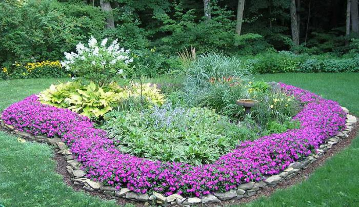 Бордюрные цветы: подбор низкорослых многолетников