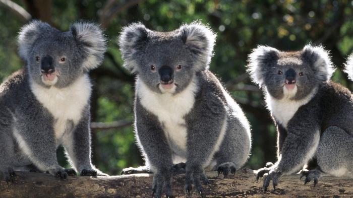 mainland australia