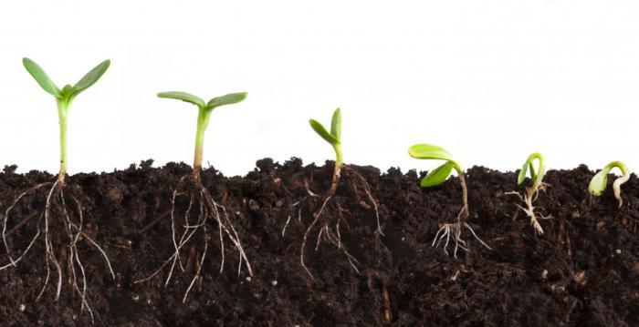 Проращиватель семян автоматический своими руками