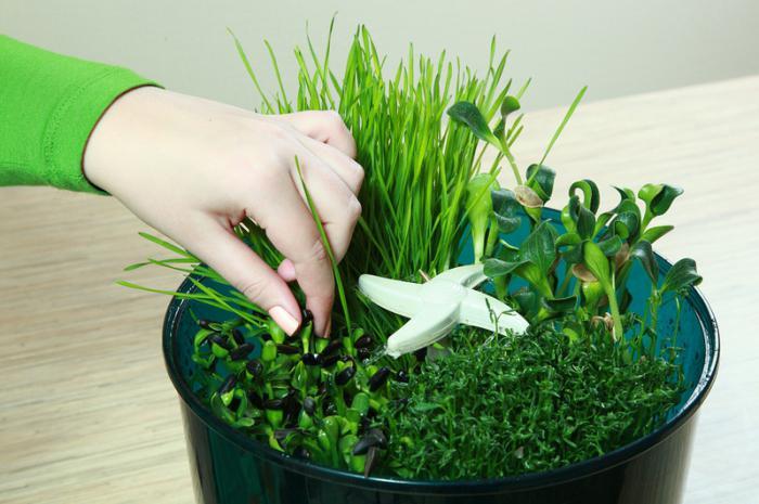 Сделать проращиватель семян