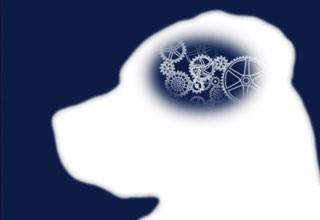 эпилепсия у собак симптомы и лечение