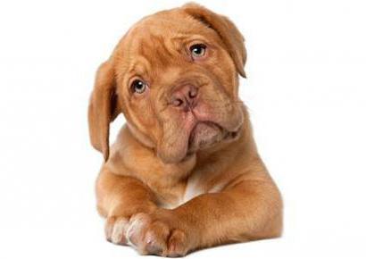 приступы эпилепсии у собак