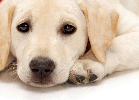 эпилепсии у собаки