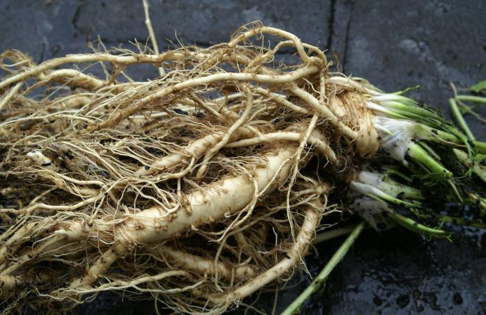 Как сделать корни хрена