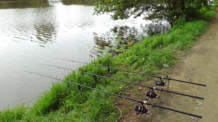 Bottom tackle for carp fishing