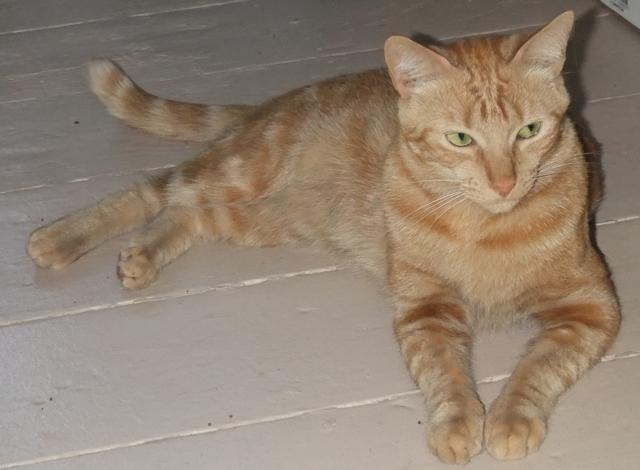 К кот чему рыжий домашний свой снится