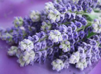 СИРЕНЕВЫЙ цвет в одежде - сочетание, 250 фото Шкатулка 37