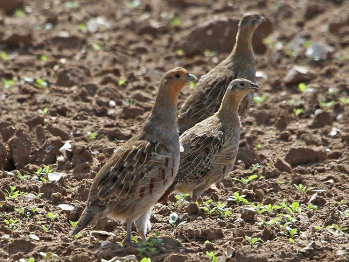 gray partridge photo