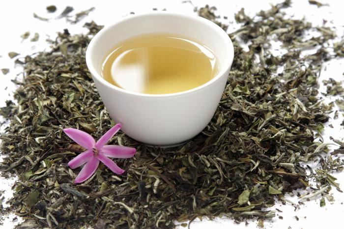 белый чай польза для похудения