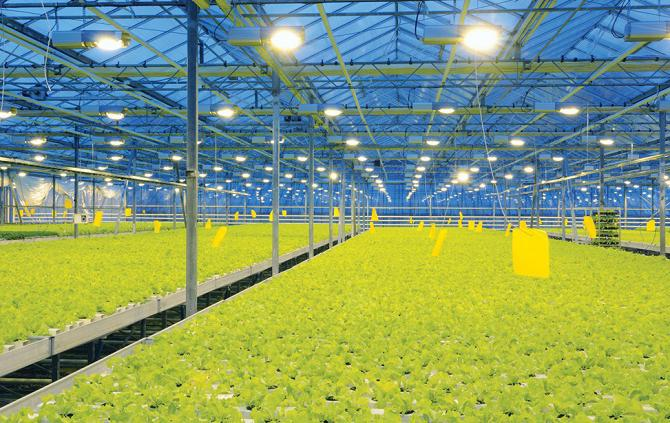 sodium lamps for greenhouses