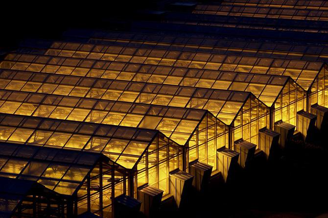 sodium lamps for plants