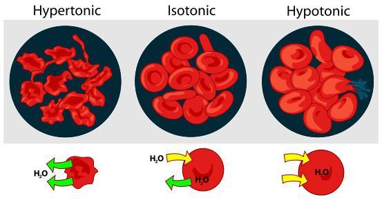 how to determine elevated hemoglobin