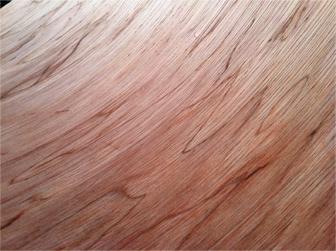 ольха дерево описание