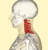 how many departments in the human spine
