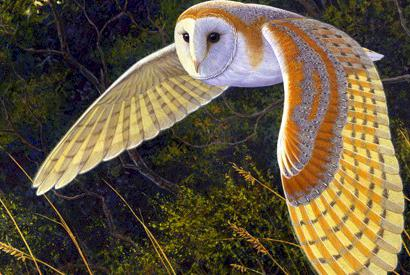 what dreams of owls with owls